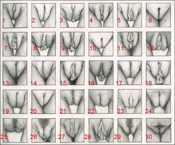 Different images and shapes of pussy
