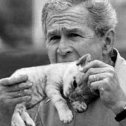 George bush eating kitten