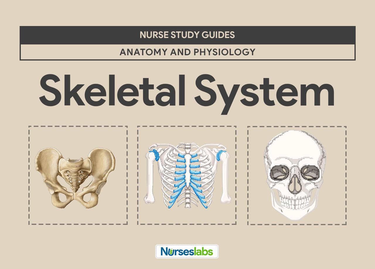 Nude large bone structure