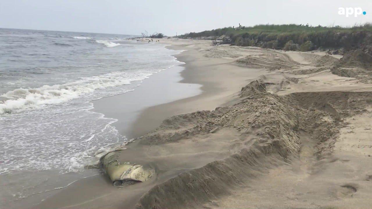 New jersey sandy hook nude beach