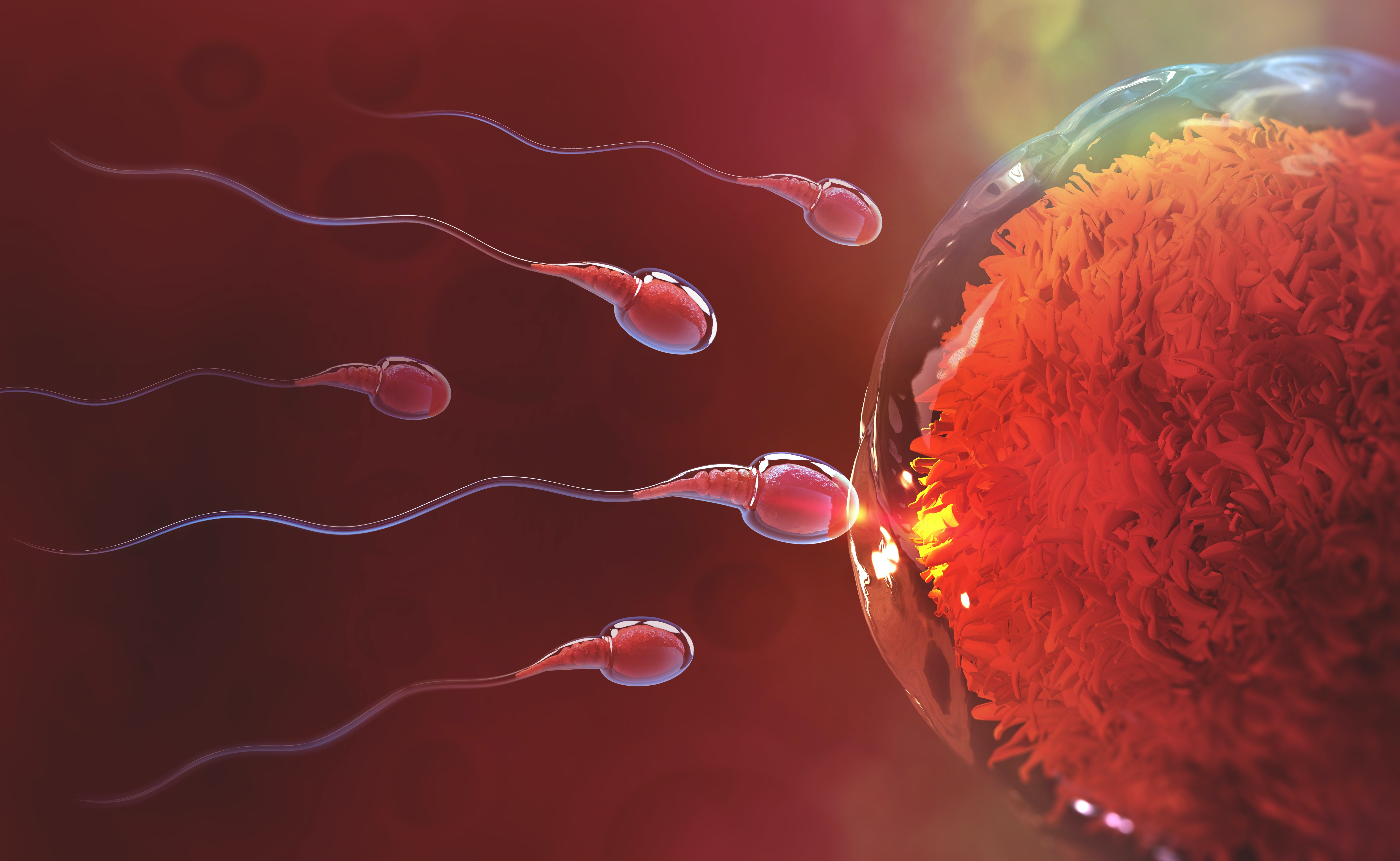 Life of sperm outside the body