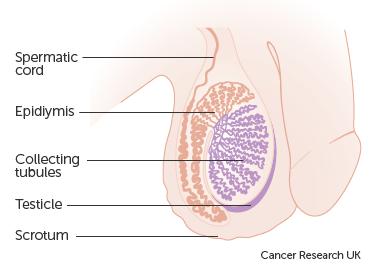 Most sensitive parts of a penis
