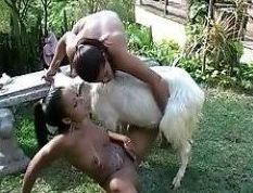 A goat pussy in porn