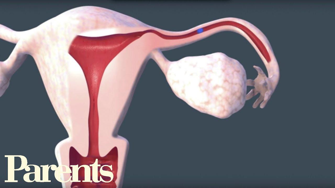 Sperm meeting ovum pics